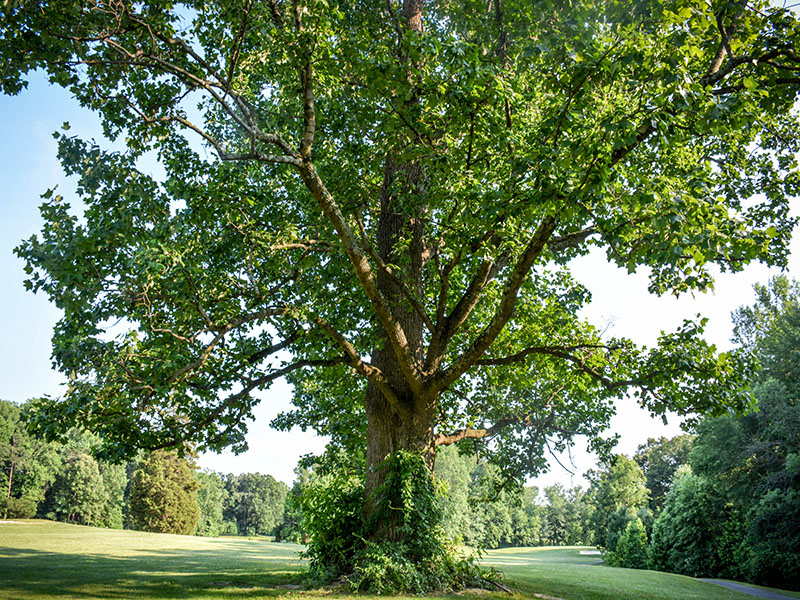 Maryland-Golf-Course-25